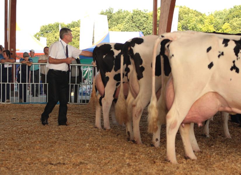 Pan Mirosław Anaczkowski, sędzia oceniający bydło mleczne w czasie Wystawy w Minikowie