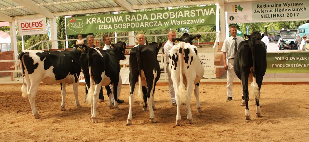 VEELA 345 z hodowli Stanisława Żochowskiego