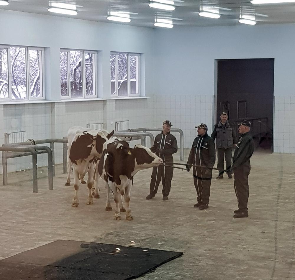Dni Otwarte nie mogą się odbyć bez udziału czworonożnych mieszkańców Centrum Produkcyjnego SHiUZ Bydgoszcz w Olecku