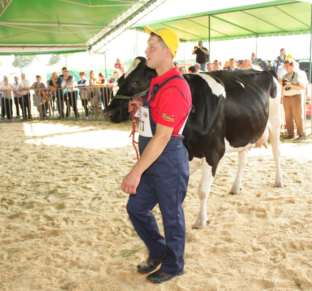 Aleksandra i Maciej Korczyk inwestują w hodowlę krów mlecznych. Syn Marcin prezentuje nowo budowaną oborę na 130 szt