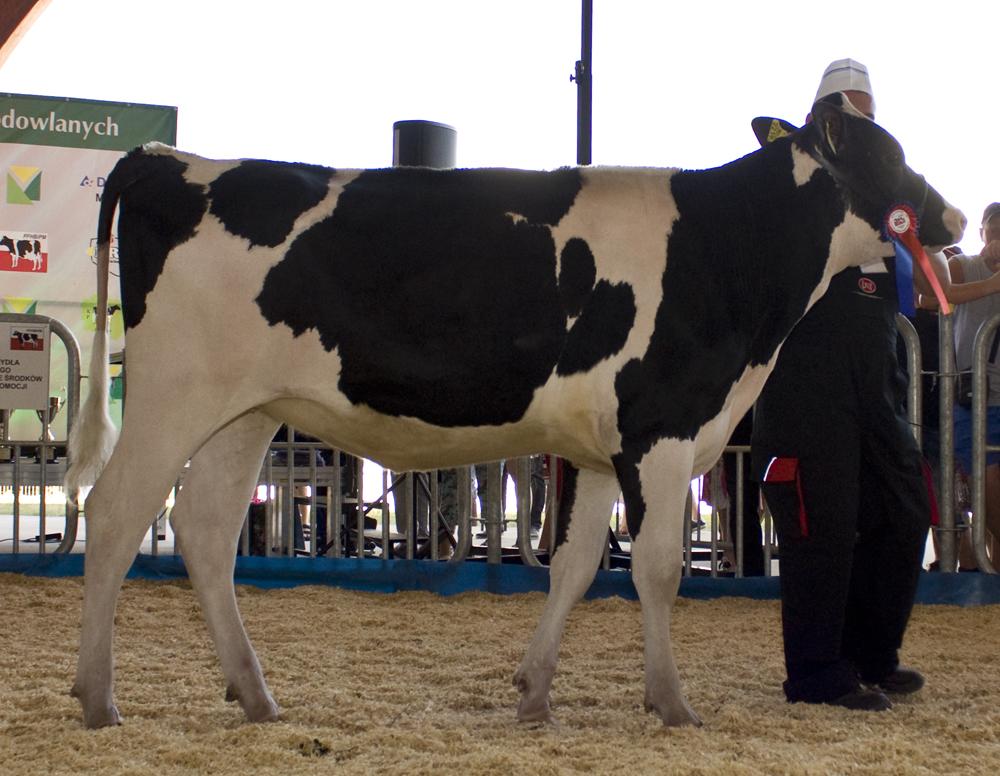 CHOINKA 5 z hodowli Zakładu Produkcji Rolnej w Kowrozie Sp. z o.o., o. INSIGNIA PL00524659676-8