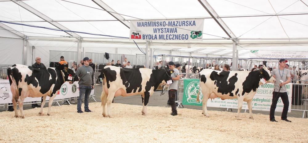 Warmińsko-Mazurska Wystawa Zwierząt Hodowlanych -Targi Zagroda – 2019